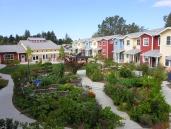Petaluma Avenue Homes, CA